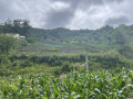 dat-y-ty-lao-cai-dien-tich-khoang-1300-m2-tai-chinh-hon-ty-view-rong-dep-small-2